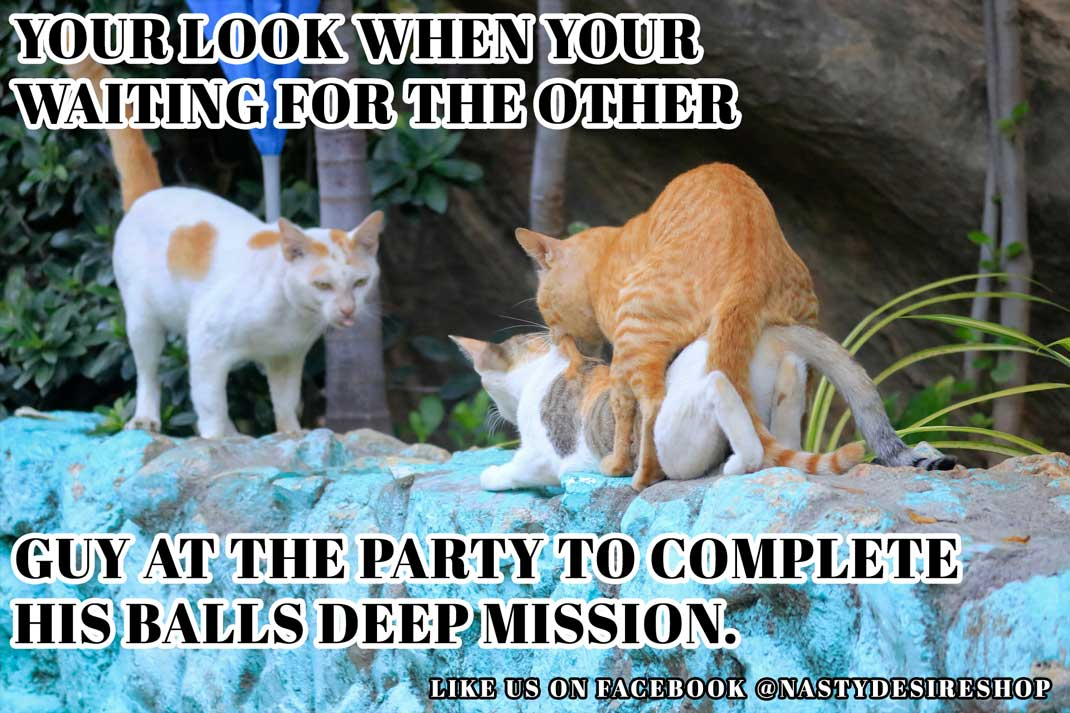 Group Sex Meme: Your Face When You're Waiting for the other Cat at the Party to Finish His Balls Deep Mission